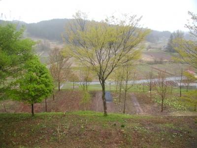 柿崎百樹の森植樹