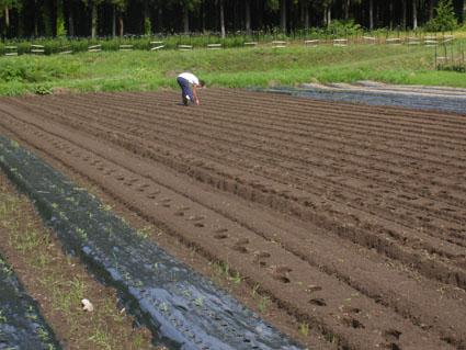 2012小麦播種1
