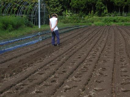 2012小麦播種2