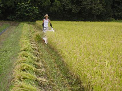 2012稲刈り1