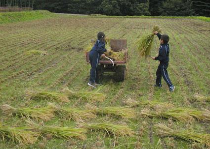 2012稲刈り3