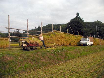 2012稲刈り6