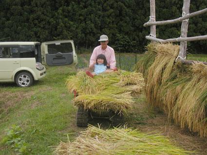 2012稲刈り7