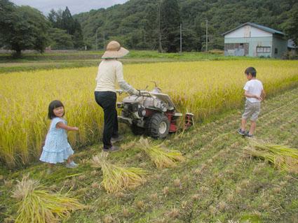 2012稲刈り8