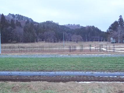 冬の小麦畑