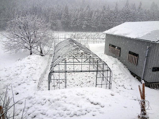 ハウス除雪2