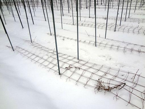 雪をかぶるネット