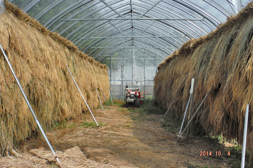ハウス稲乾燥中