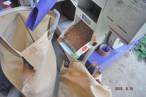小麦選別2015