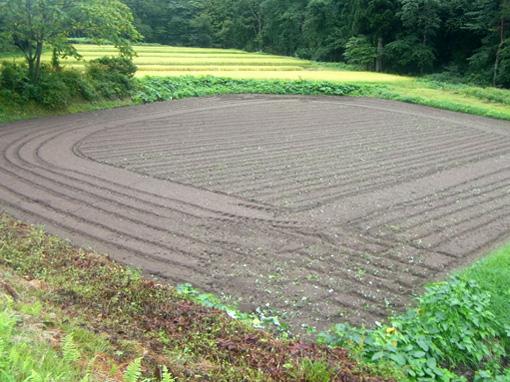 小麦蒔き溝