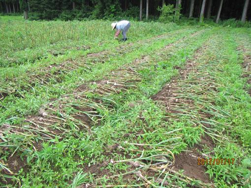 八幡平収穫