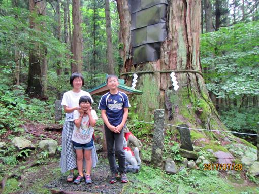 志和稲荷巨木杉