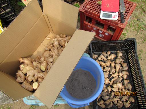 種生姜の準備