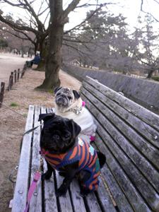 夙川公園のベンチで