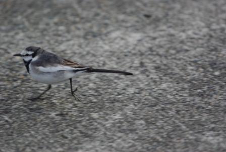逃走する鳥