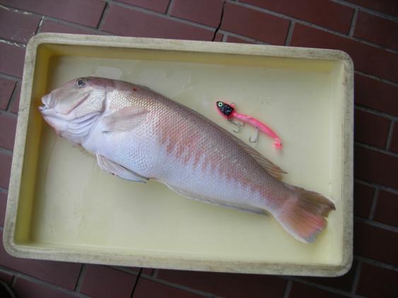 2.1キロの白甘鯛