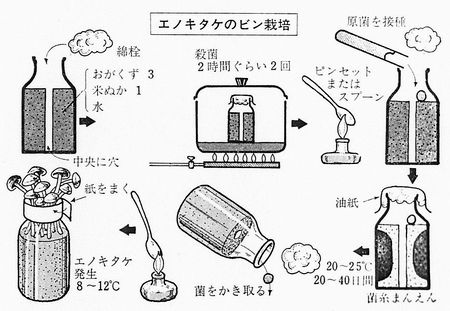 420207 エノキタケのびん栽培