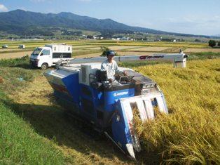 お客様お届けの会津エコ米コシヒカリ・稲刈り始めました。