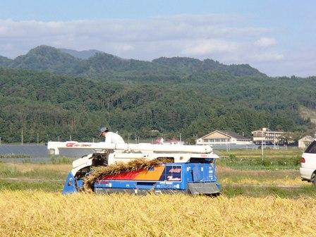 2013稲刈り