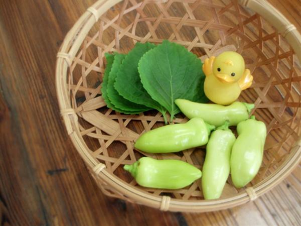 水耕栽培の野菜収穫