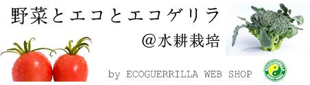 水耕栽培のエコゲリラ店長ブログ