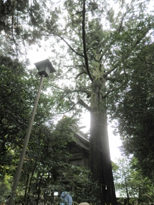 樹齢1200年のご神木大杉さんとご本殿