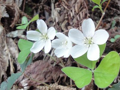 参道に咲く花