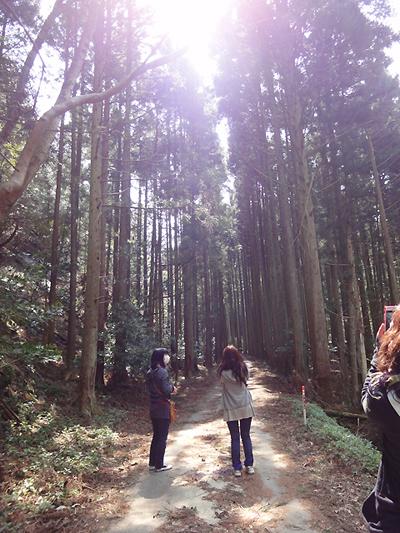 神聖な空気感の杉木立