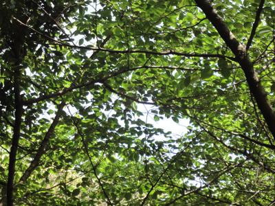 長浜神社 木漏れ日