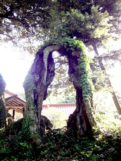佐比賣山神社