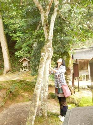 神魂神社で見つけた夫婦椿