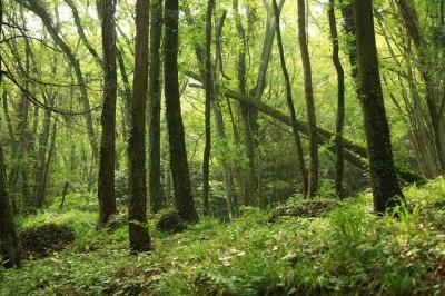 清水大師寺の森