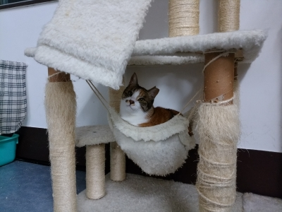 ハンモック猫のユキ