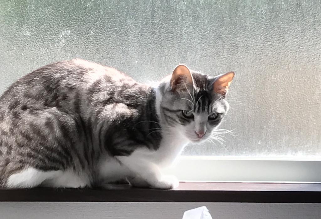 緊張猫ロイド