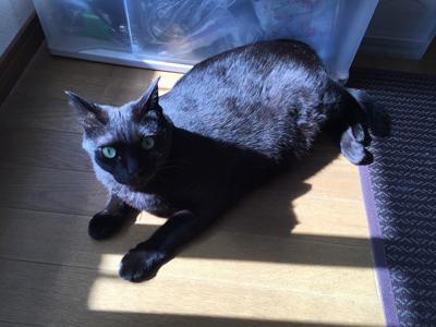 黒猫ロデム