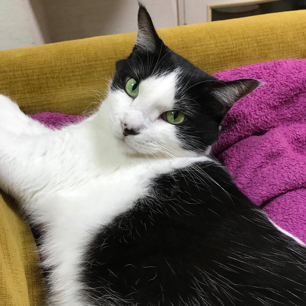 白黒猫のたーぼ