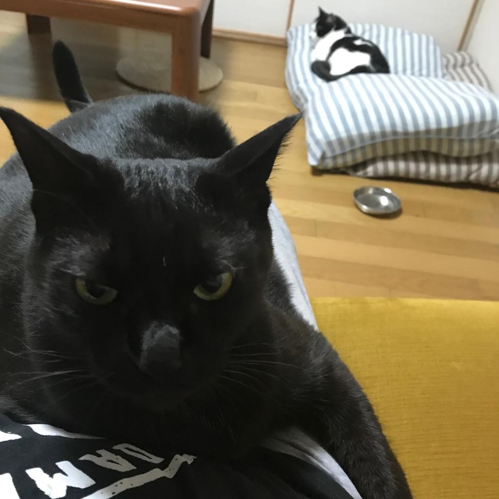 黒猫のむう