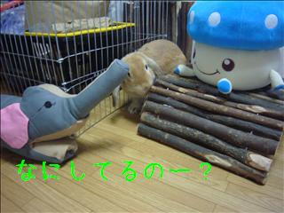 なになに〜?(*´∇`*)