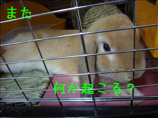 ウサギの勘?