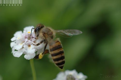 とりあえず蜂を撮る