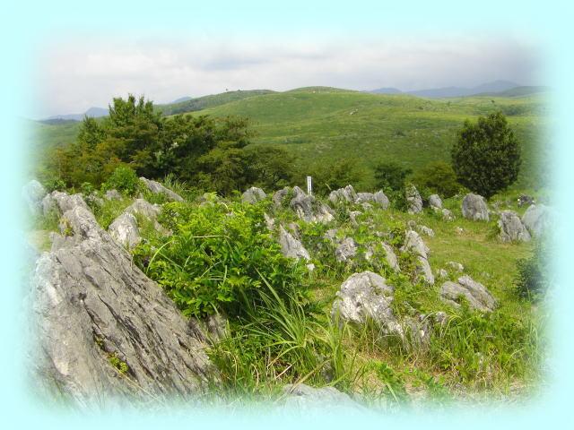 秋吉台の全景。遠くから見ると、緑の草に全面が覆われているが、近くによると、手前の石灰岩の岩がゴロゴロしている。