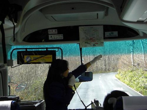 八甲田山中のブナの木の両脇を通り過ぎるバスのガイドさん