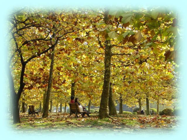 フランス庭園のプラタナスの並木