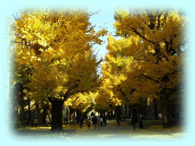 東京大学本郷キャンパスの銀杏並木