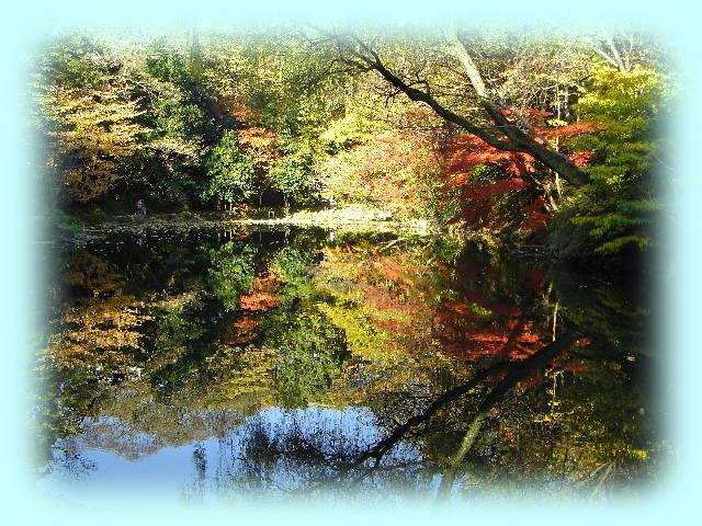 東京大学本郷キャンパスの三四郎池に映る秋