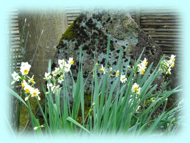 水仙も、咲いていた
