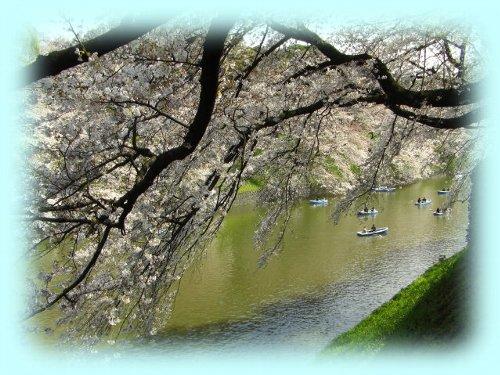 こちら側の桜越しに遊覧ボートを眺める
