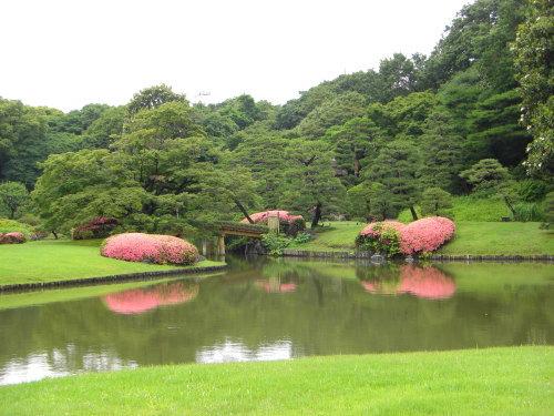六義園の池の中の島にかかる田鶴橋の両脇のサツキ