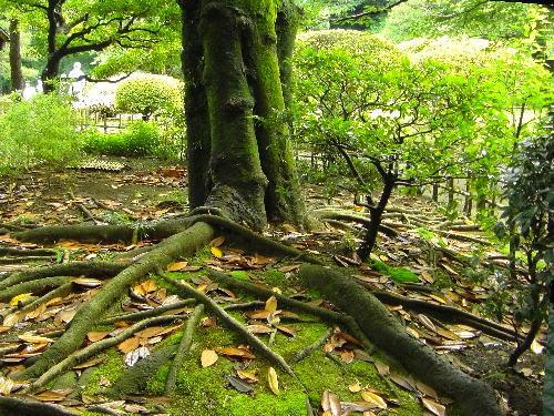 六義園の緑鮮やかな大木の幹と苔