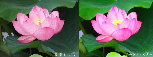 不忍池の蓮を標準レンズの望遠(左)とポップアートフィルター(右)で撮ったもの